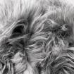 Peau de mouton europe teintée grise