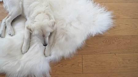 Peaux de mouton